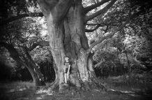 Herman foran den danske nasjonalbøken - et gammelt stort tre på Langelands østkyst